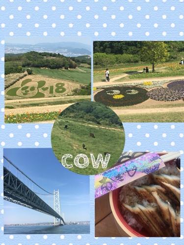 /home-ncj.co.jp/cgi/png/hinokiya/2018/viewdata/145.jpg