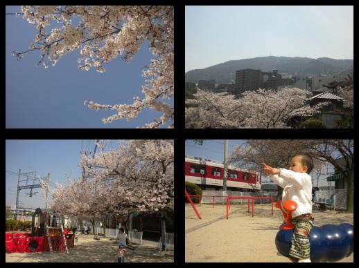 公園でお花見♪